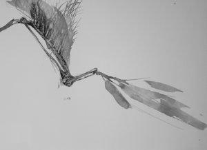 UNTITLED STUDY I - Jocelyn Anne Rabbitts