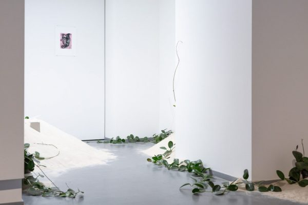 Maija Annikki Savolainen, Solarphytes, ISSP gallery, Riga (2018)